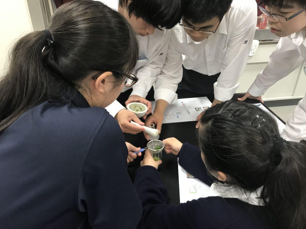 【特進コースブログ】生物基礎の実験